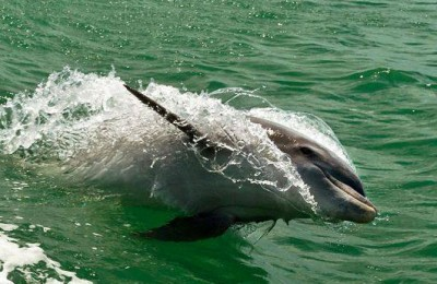 Dunedin Dolphin Cruise