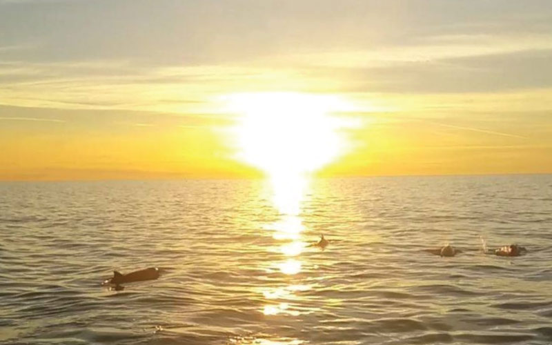 Sunset Tour with Dolphins