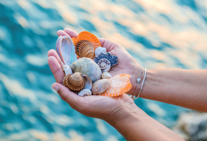 Hands holding seashells in Dunedin Florida