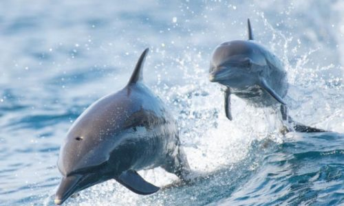dolphin excursions